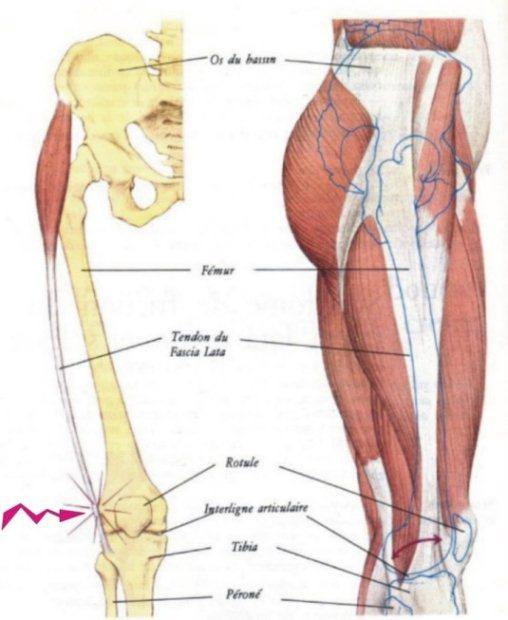 Course pied conseils running et jogging le blog jiwok for Douleur sur le cote exterieur du genou