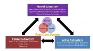 Le concept de  core stability  du pied 2