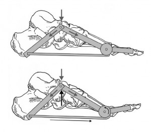 Le concept de  core stability  du pied 3